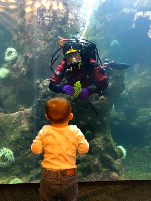 Happy Go Bliss by Andrea Bliss Veale Travel Guide Blog Seattle Aquarium Baby
