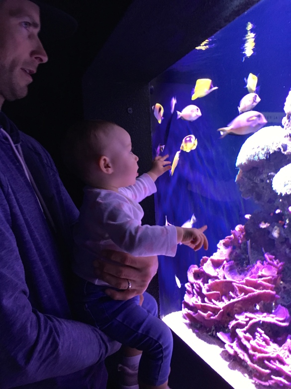 Happy Go Bliss by Andrea Bliss Veale - Travel Guide Seattle Blog Happy Go Bliss Aquarium Fish Daddy Daughter