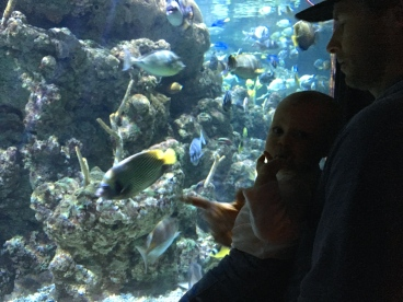 Travel Guide Seattle Travel Blog Happy Go Bliss sight seeing Aquarium Fish Baby