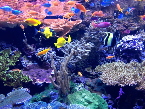 Happy Go Bliss by Andrea Bliss Veale Travel Guide Seattle Blog Aquarium Fish